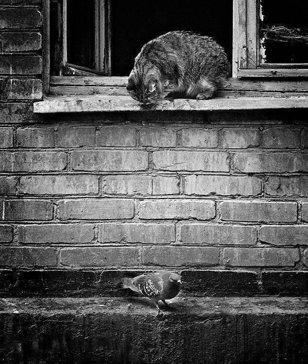 Śmieszne zdjęcia zwierząt #3 44