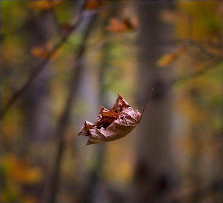 Barwy jesieni 40