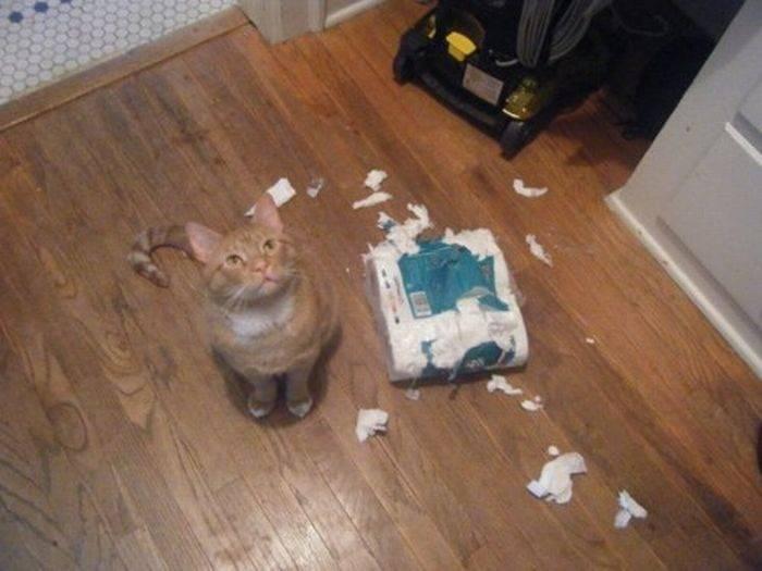 Nieznośne koty 26