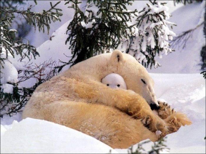 Niedźwiedzie #2 27