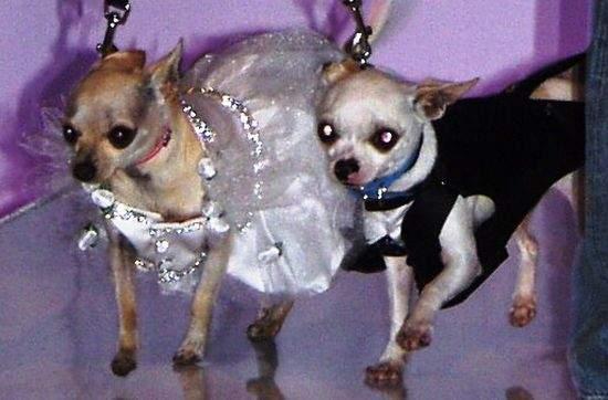 Śluby zwierzaków 1