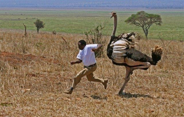 Tylko w Afryce #2 9