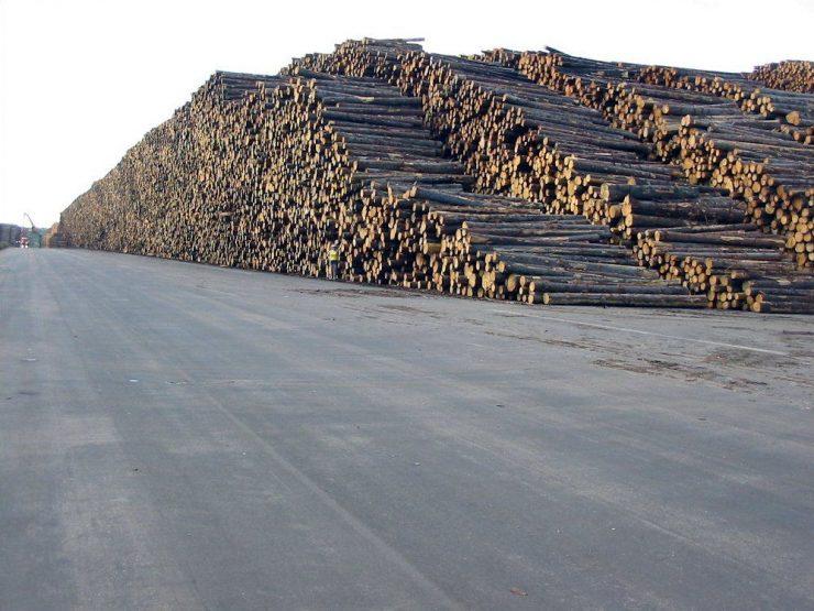 Największy skład drewna 2