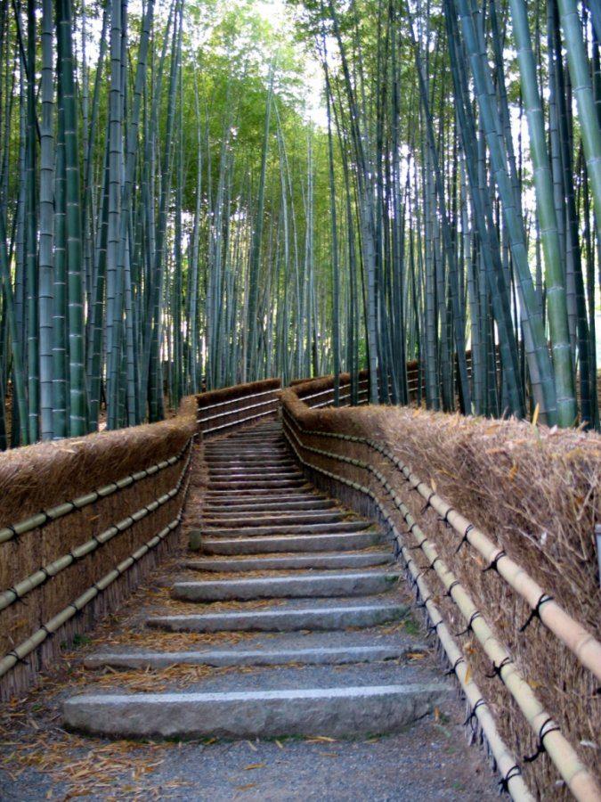 Las bambusowy 1