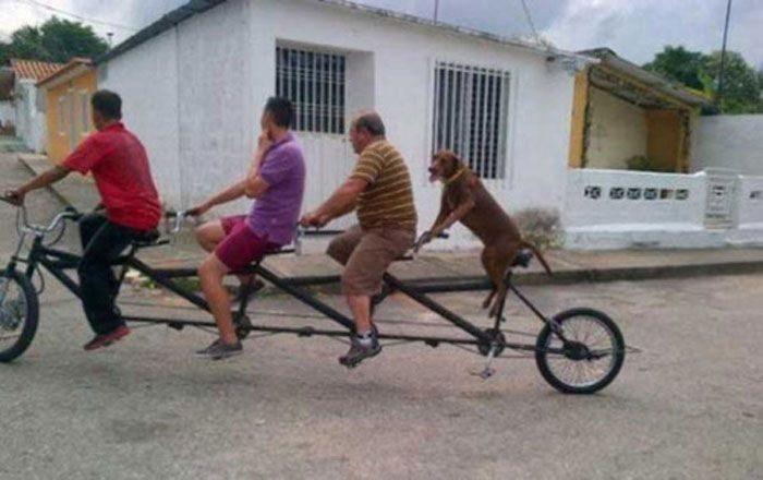 Zabawne zdjęcia psów 27