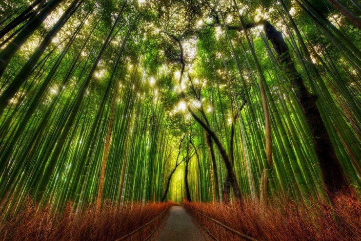 Las bambusowy 3
