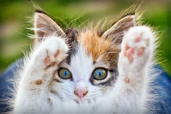 Koty #2 26