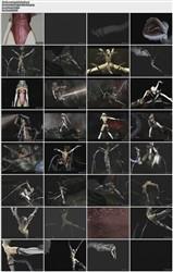Labyrinth Sophia (2010/GameRip) [A THIRD DIMENSION] 214.22 MB