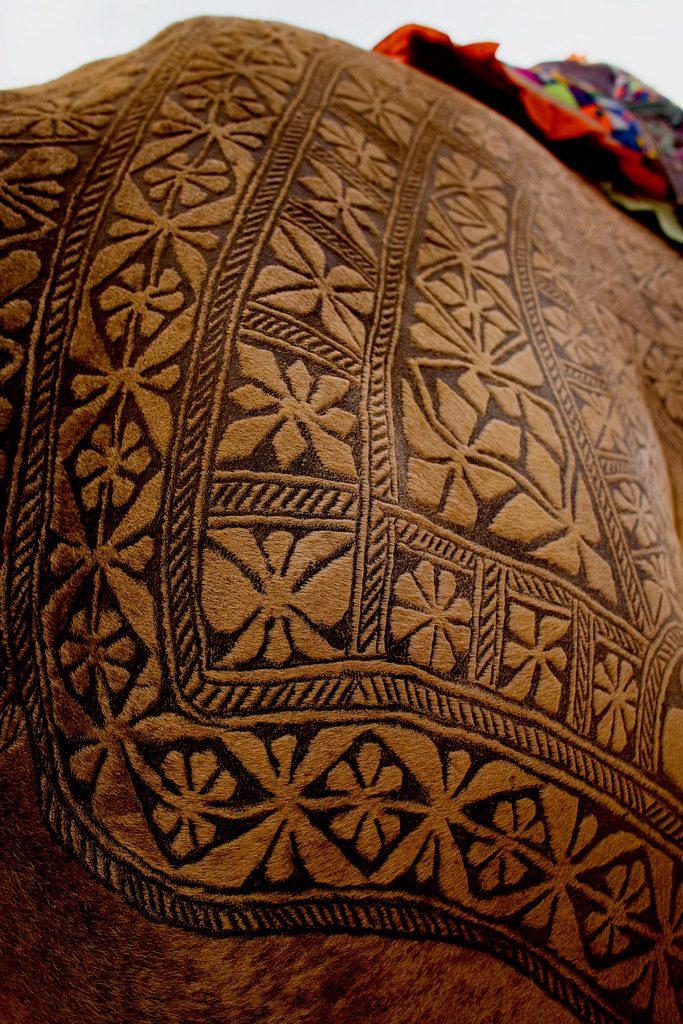 Bikaner Camel Festival 9