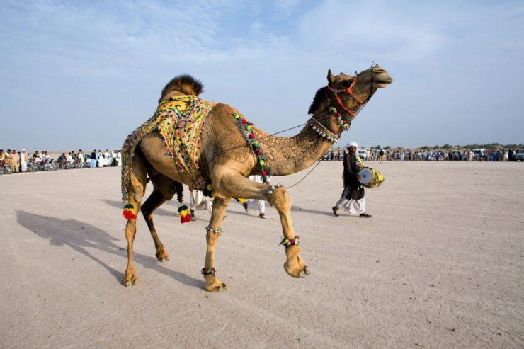 Bikaner Camel Festival 2