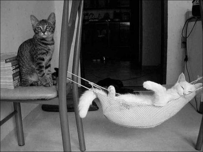 Wyluzowane koty 48