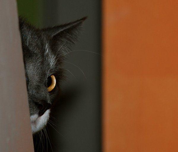 Przyczajone koty #2 24