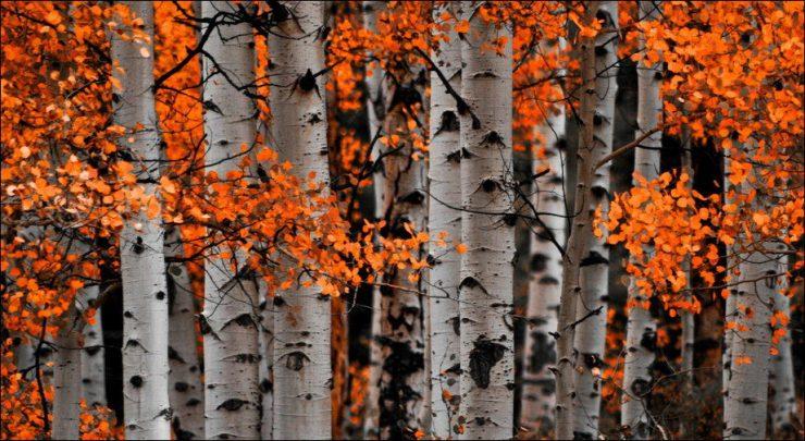 Barwy jesieni 11