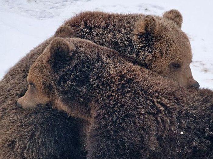 Niedźwiedzie 6