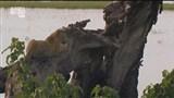 Скачать с letitbit  Львы и Великаны / Lions and Giants on the Edge (2008)  HDTVRip