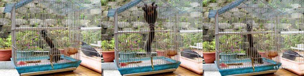 Eines der verrückten Eichhörnchen