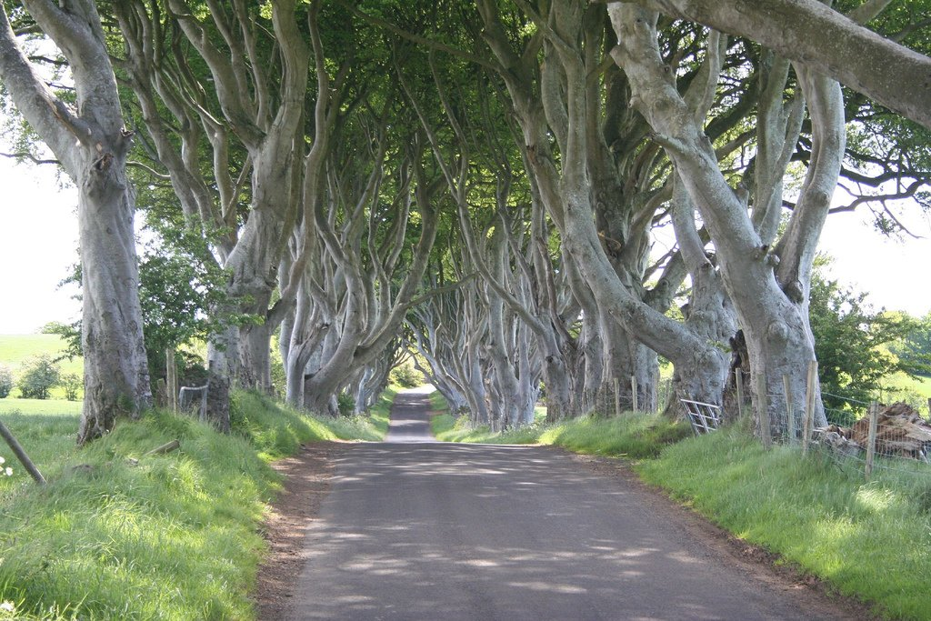 The Dark Hedges 4