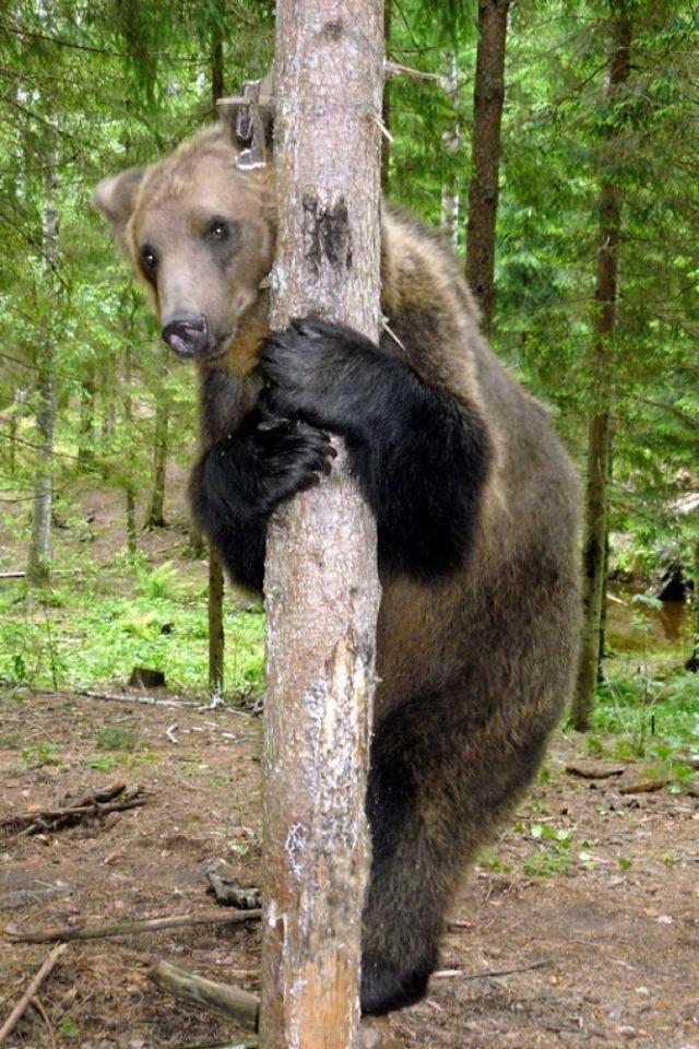 Porzucony niedźwiadek 24