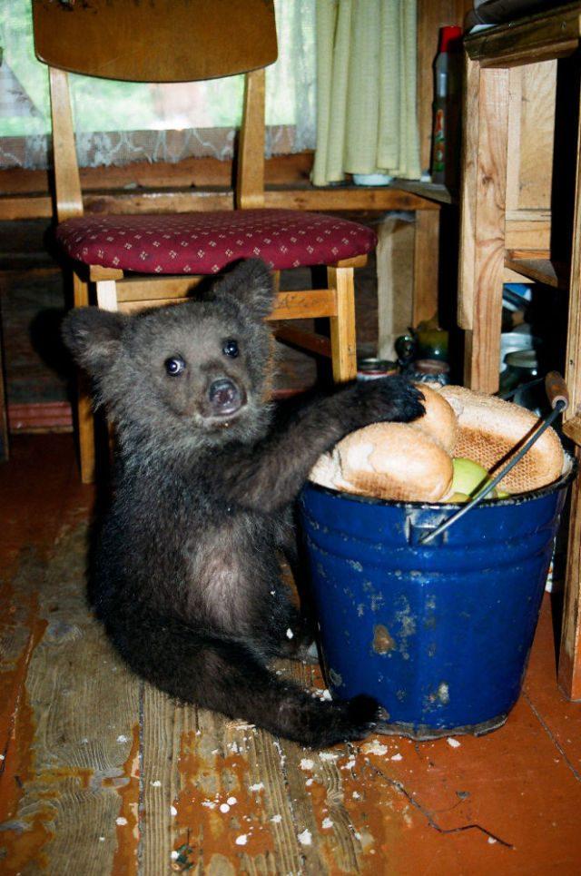 Porzucony niedźwiadek 9